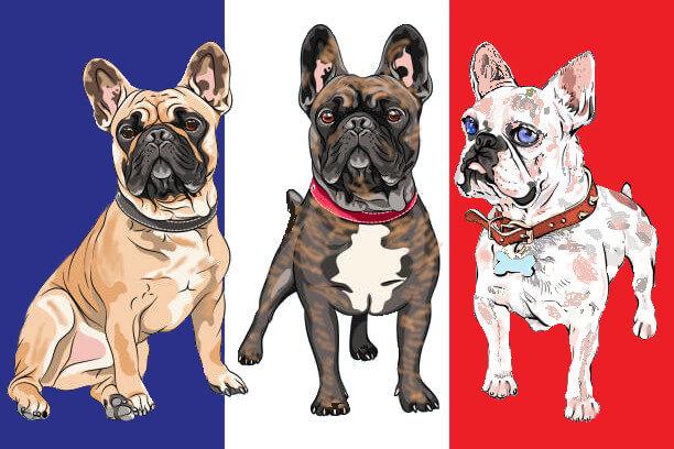 Tipos de Bulldog Francés